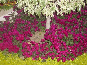 Beautiful small front garden decor