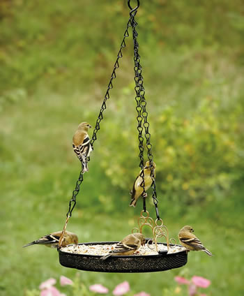 Diy bird feeders projects to do with kids for Mesh feeder ideas