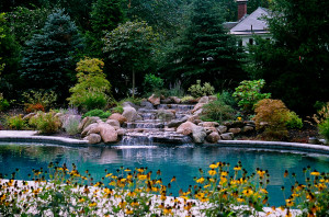 Modern pool landscaping ideas with rocks and plants for Pool design guide