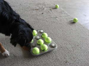 Interactive DIY dog toys