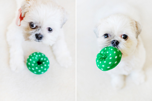 Stuffed dog toys DIY