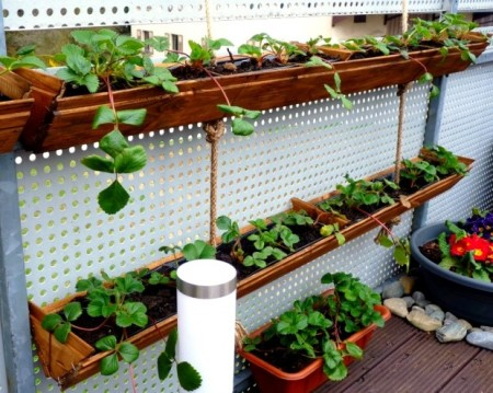 Cheap DIY garden ideas