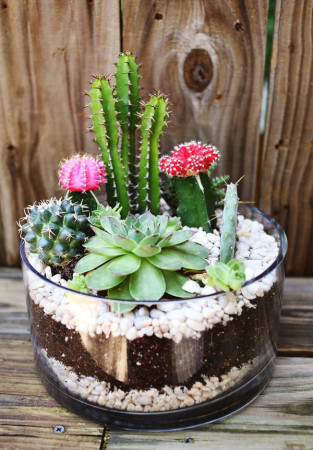 DIY Cactus garden ideas